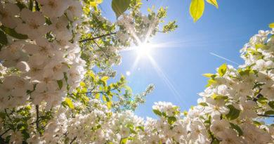 Цитаты о весне: 100 красивых афоризмов со смыслом ✍